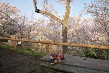 桜と中央アルプス