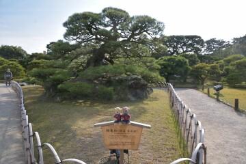 栗林公園 鶴亀の松